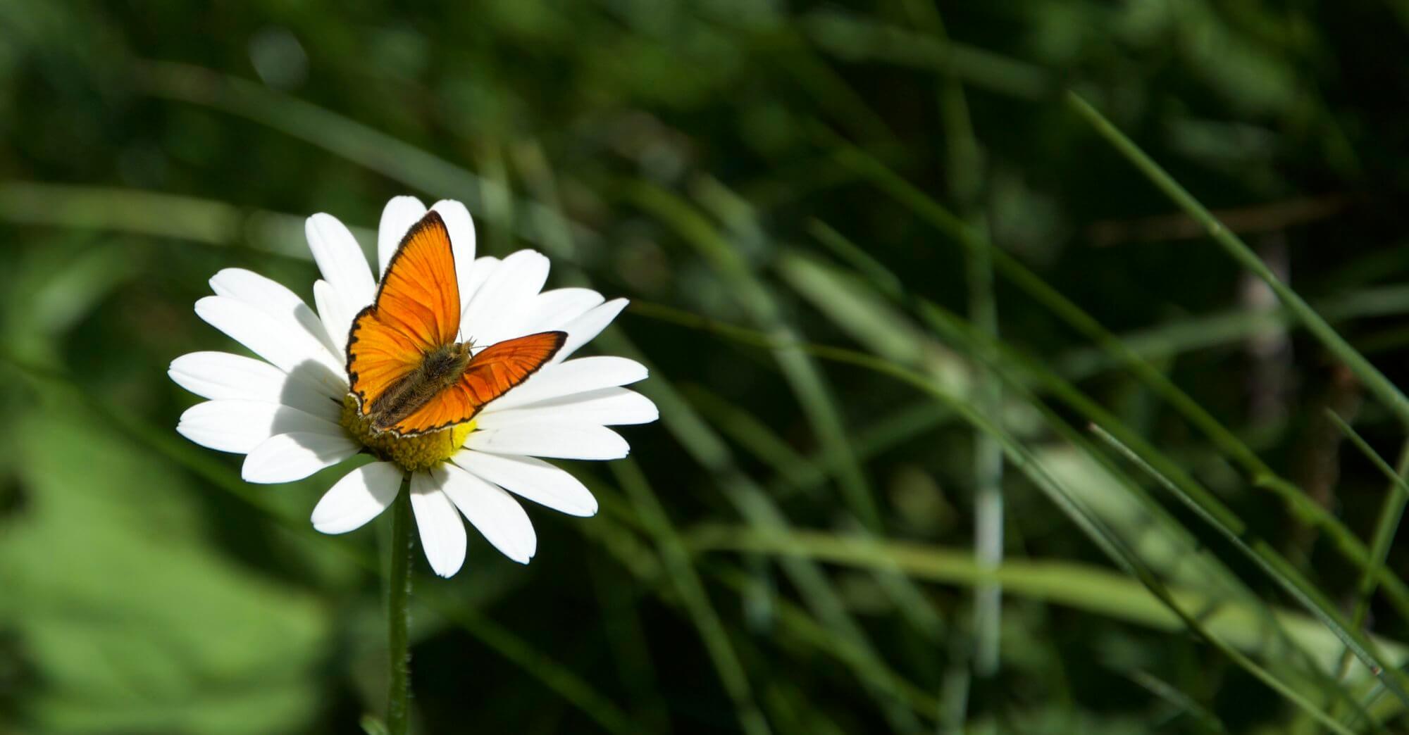 ButterflYoga